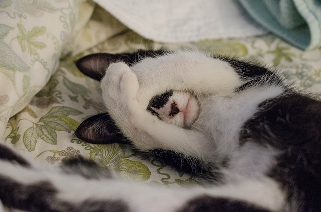 schovaná kočka