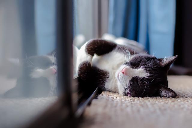 kočka